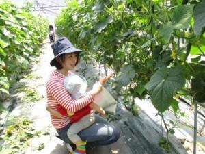 野菜きゅうり9