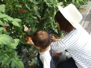 野菜トマト6-2